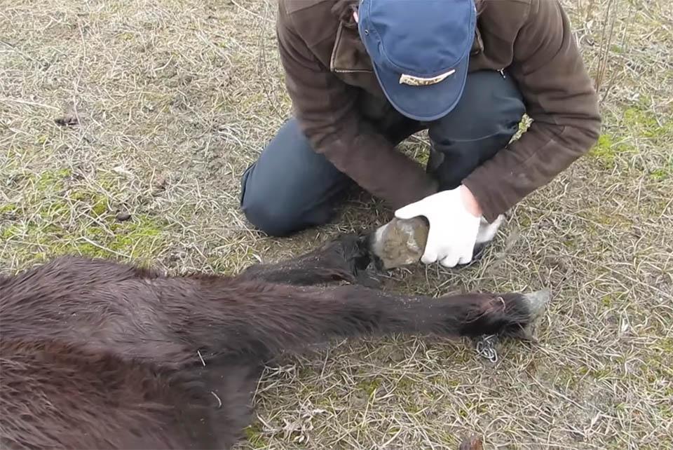 Veterinario libera caballo