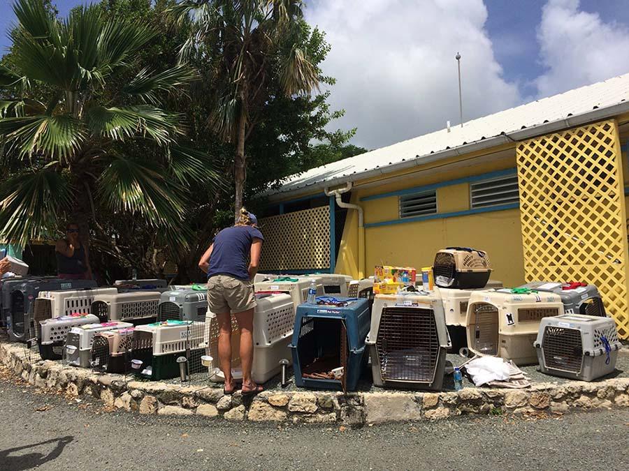 300 animales rescatados del huracán