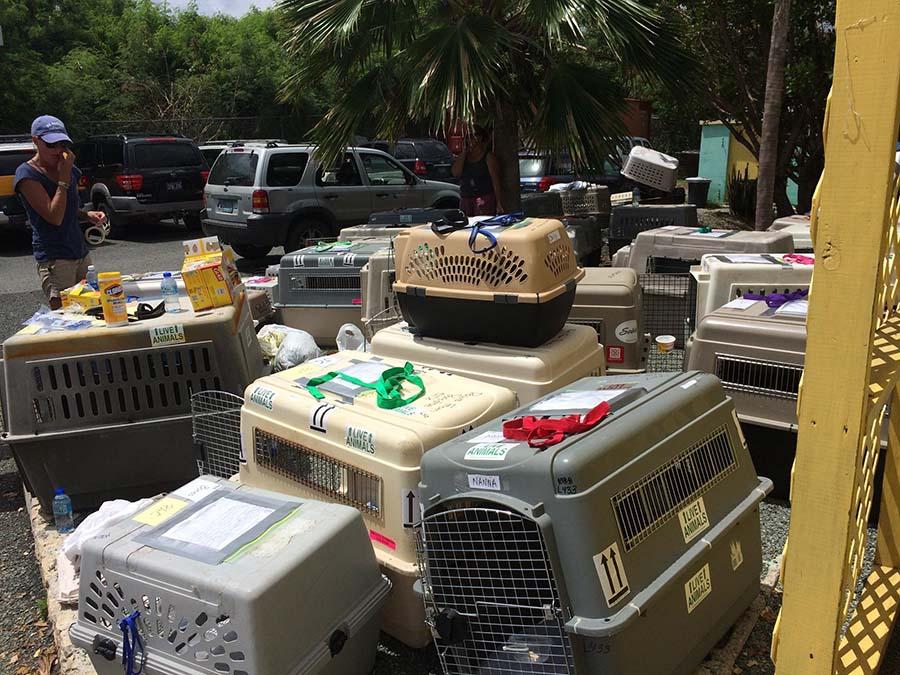 300 animales rescatados