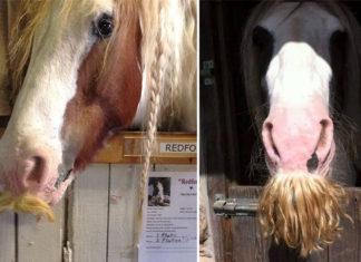 A los caballos les puede crecer bigote