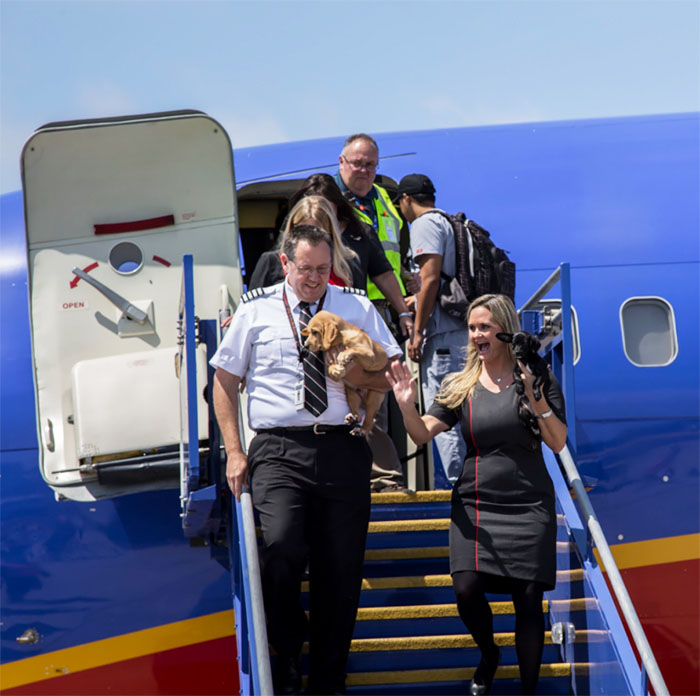 Aerolínea ayuda animales rescatados