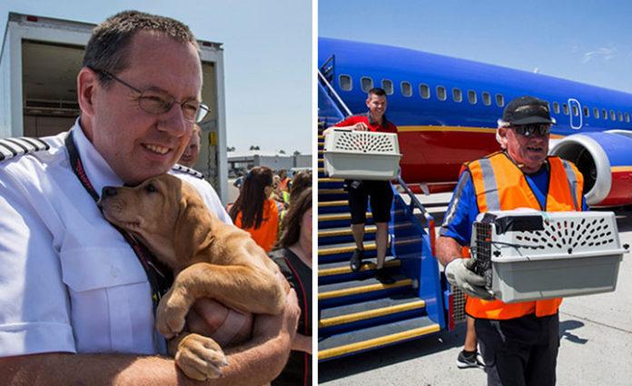 Aerolínea vuela con perros y gatos rescatados del huracán