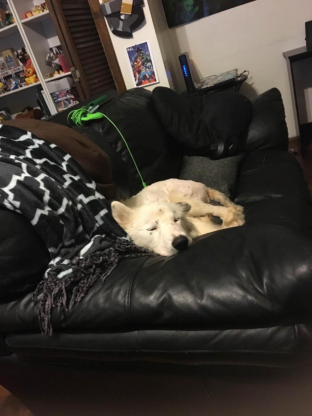 Amy durmiendo