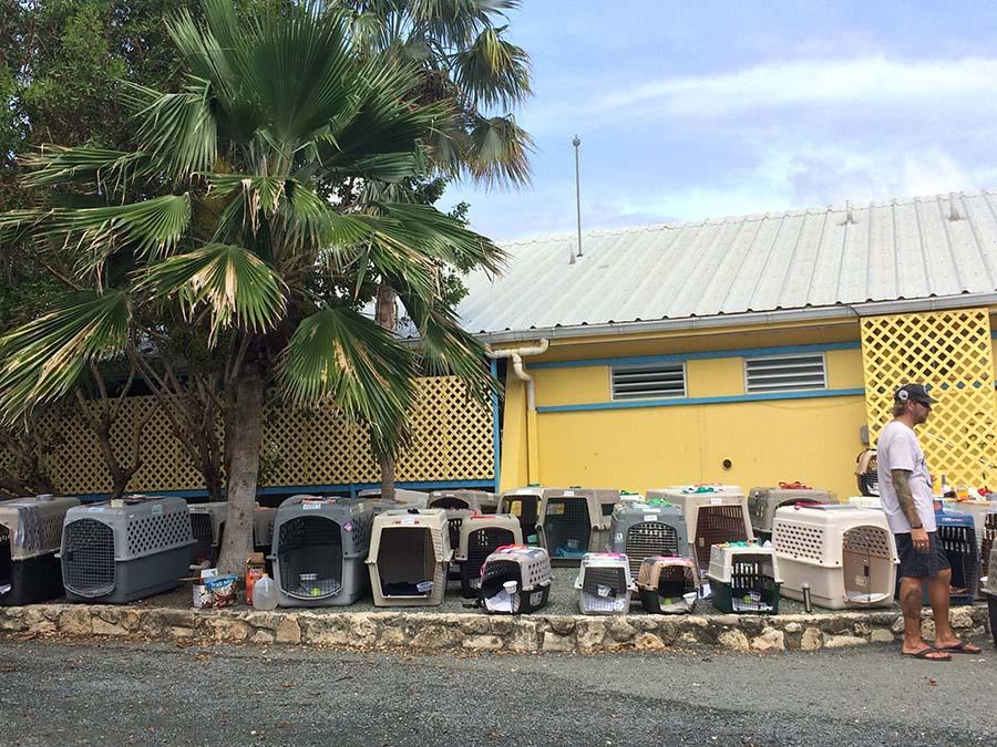 Animales rescatados del Huracán María