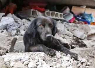 Ayudar animales sismo en México