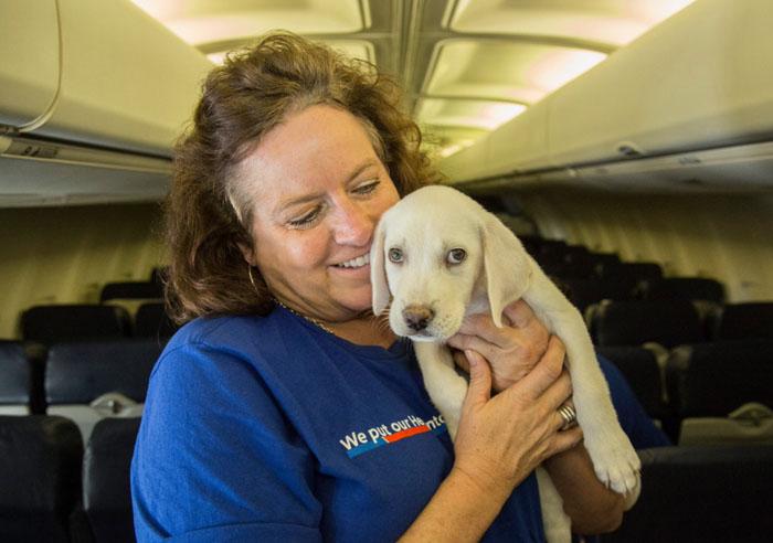 Cachorro desplazado por huracán