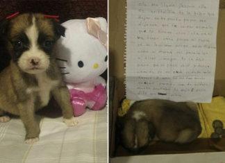 Conmovedora carta de niña obligada a abandonar a su perro