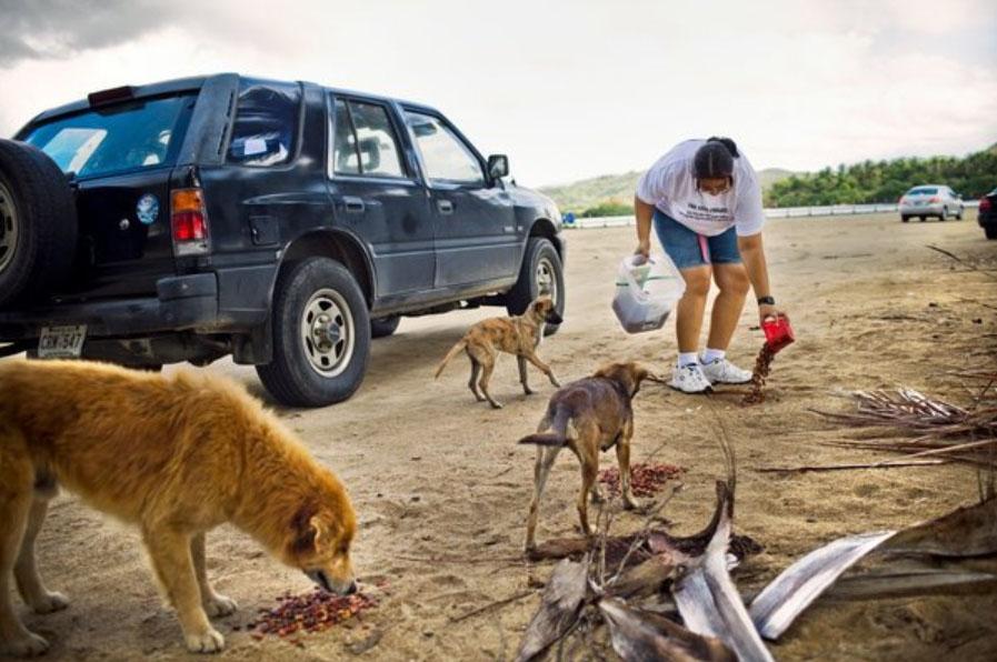 Dead Dog Beach