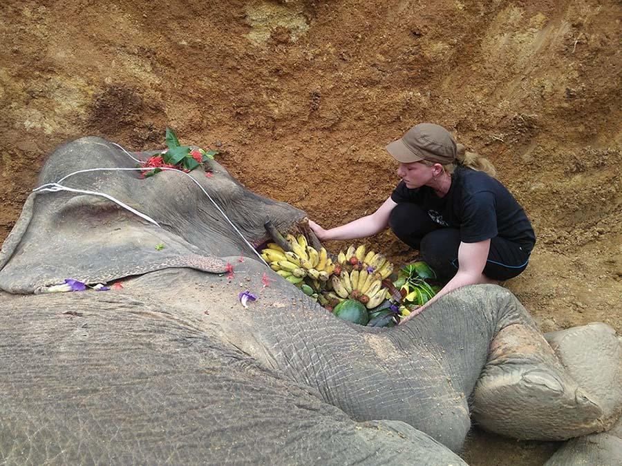 Despedida elefante forzado a pasear a los turistas