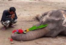 Despiden a elefante