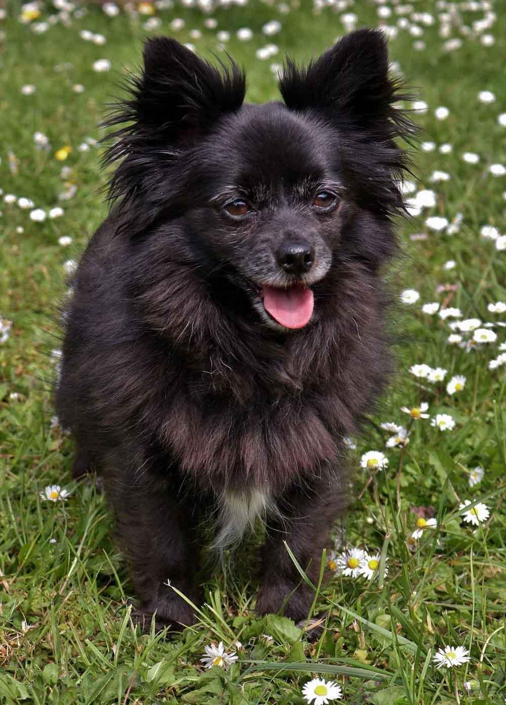 hipertiroidismo sintomas en perros