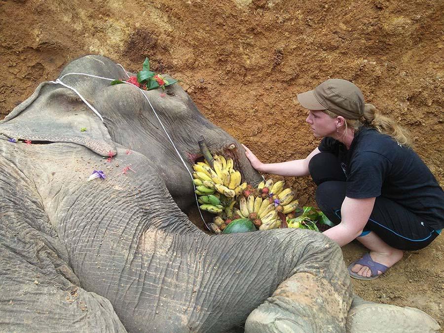 Elefante despedida