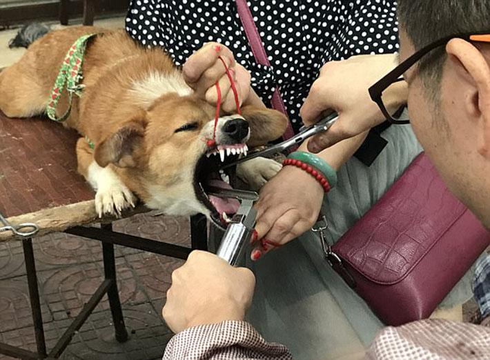 Eliminan cuerdas vocales de perro en la calle