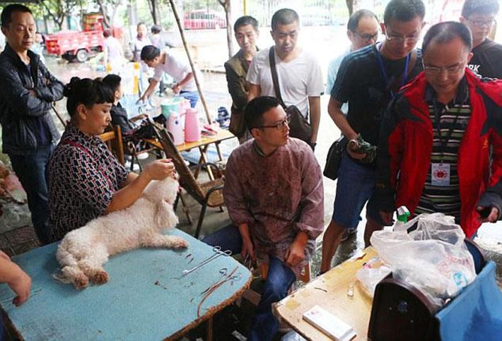 En las calles de China eliminan cuerdas vocales a los perros