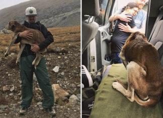 Escuchan que un perro llora en la montaña y subió a ayudar