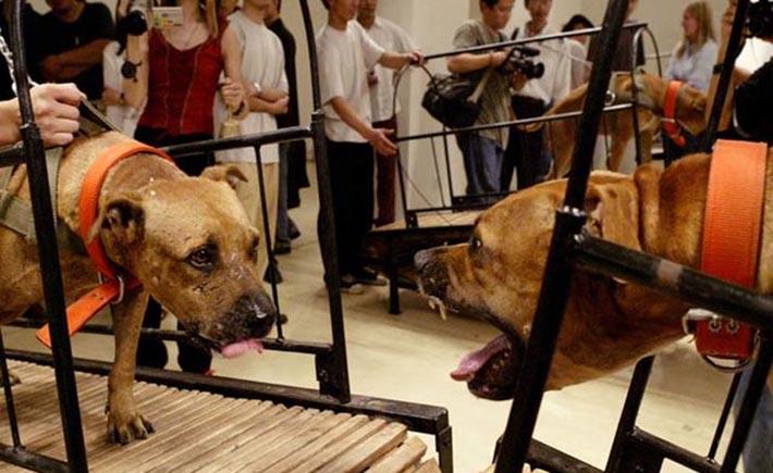 Exposición del museo Guggenheim exhibe perros de pelea
