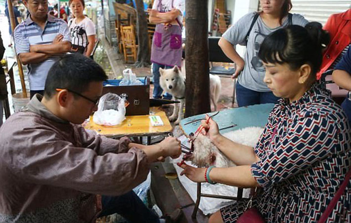 Falso veterinario chino