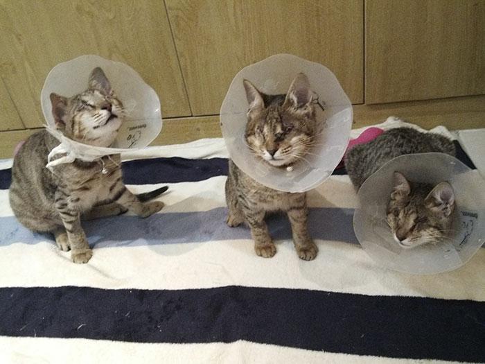 Familia de gatos ciegos
