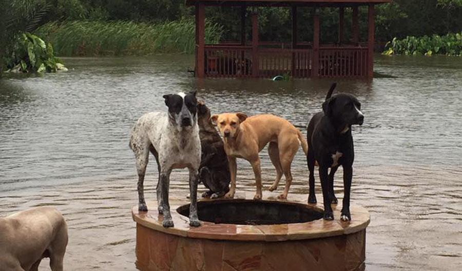 Familia se queda con sus 14 perros afrontando el huracán