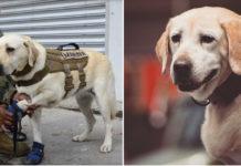 Frida perra que rescata personas en el terremoto de México
