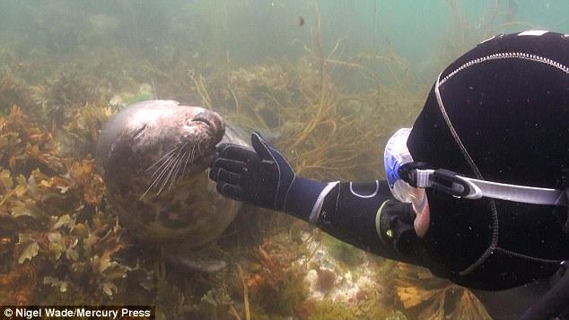 Gary Grayson y una foca