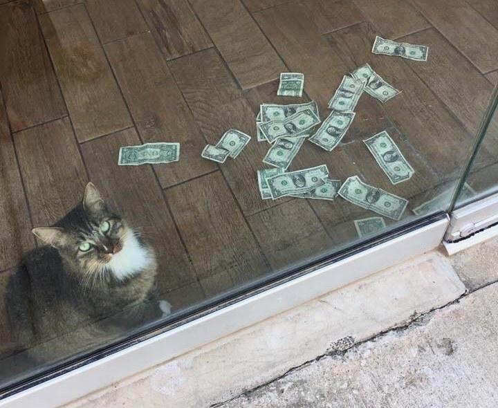 Gatito con su dinero