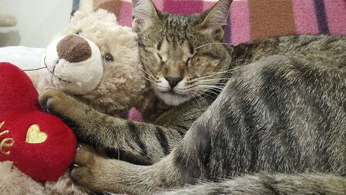 Gato adoptados