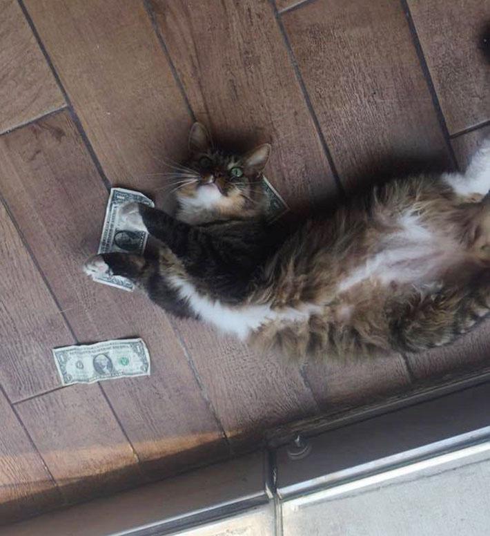 Gato ama el dinero