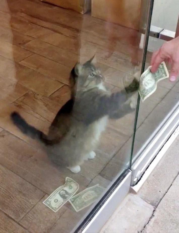 Gato arrebata dinero