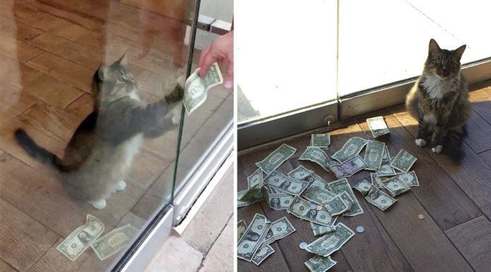 Gato arrebata el dinero de los transeúntes