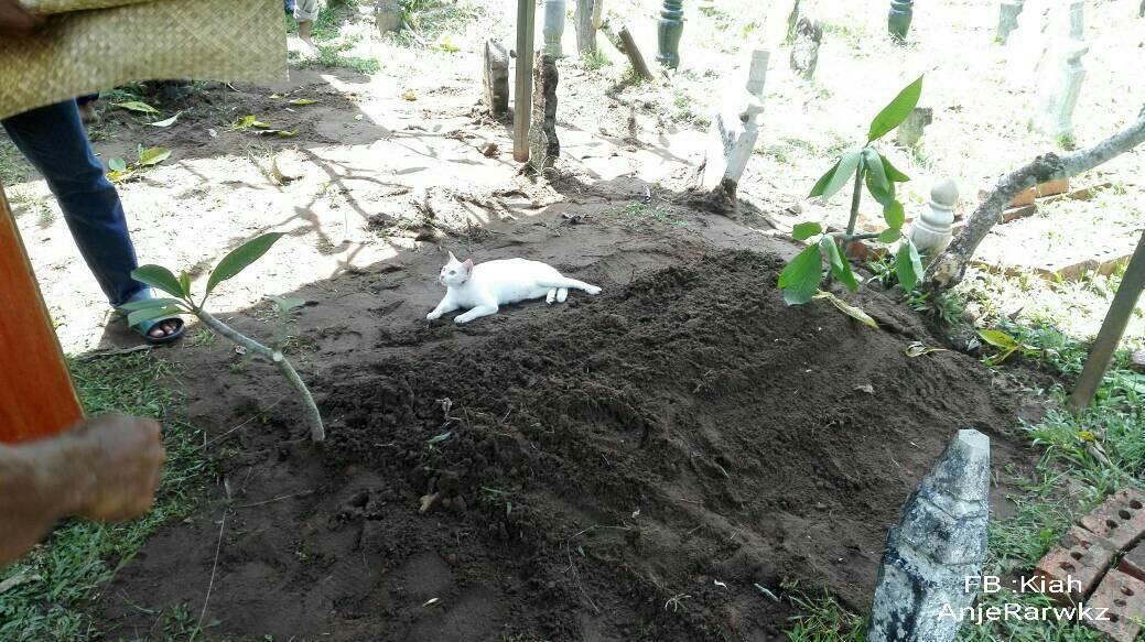 Gato blanco en la tumba