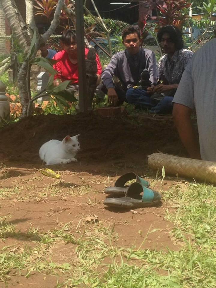 Gato blanco en un funeral