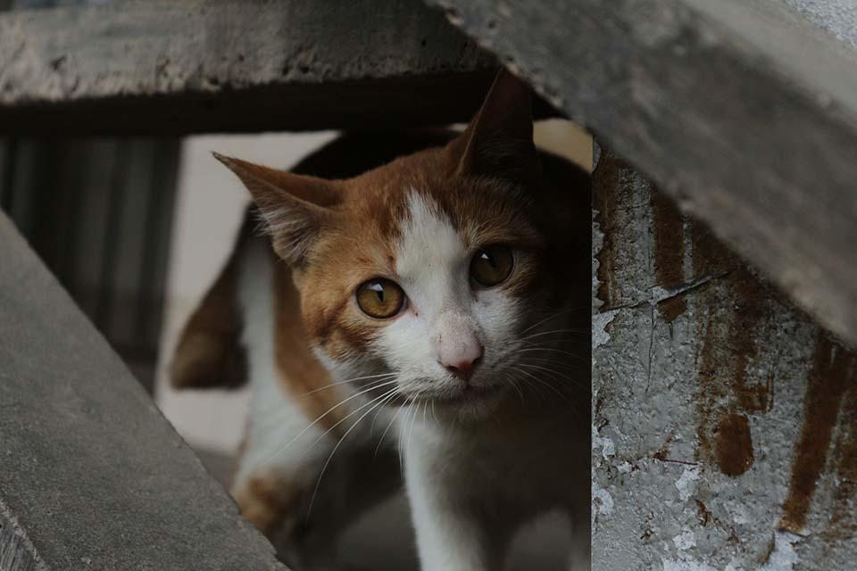 Sida felino s ntomas transmisi n prevenci n y diagn stico for El sida se contagia por saliva