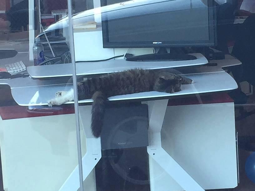 Gato de oficina