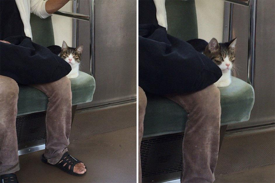 Gato en el metro de Tokio