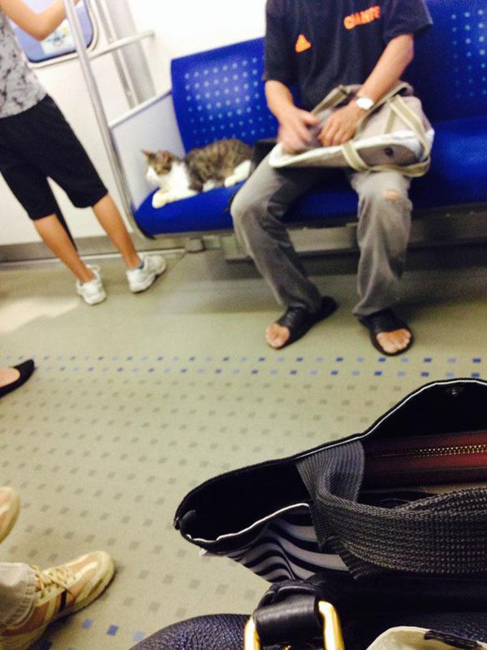 Gato en el metro