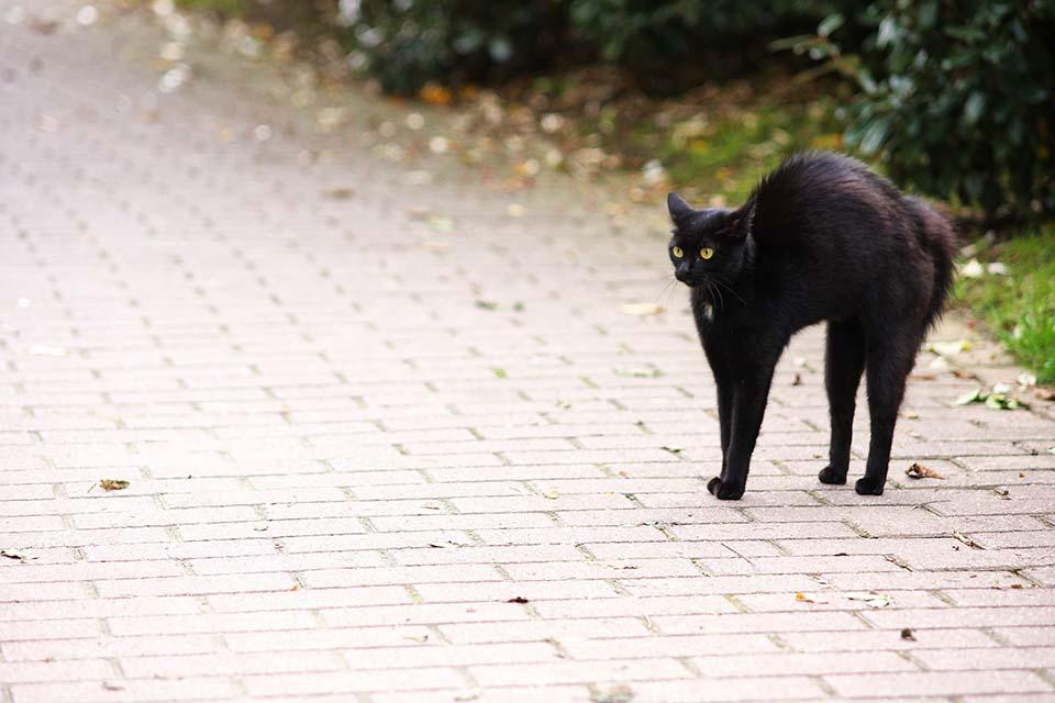 Regularmente la detección del Sida en gatos es la aparición de enfermedades constantes en el animal