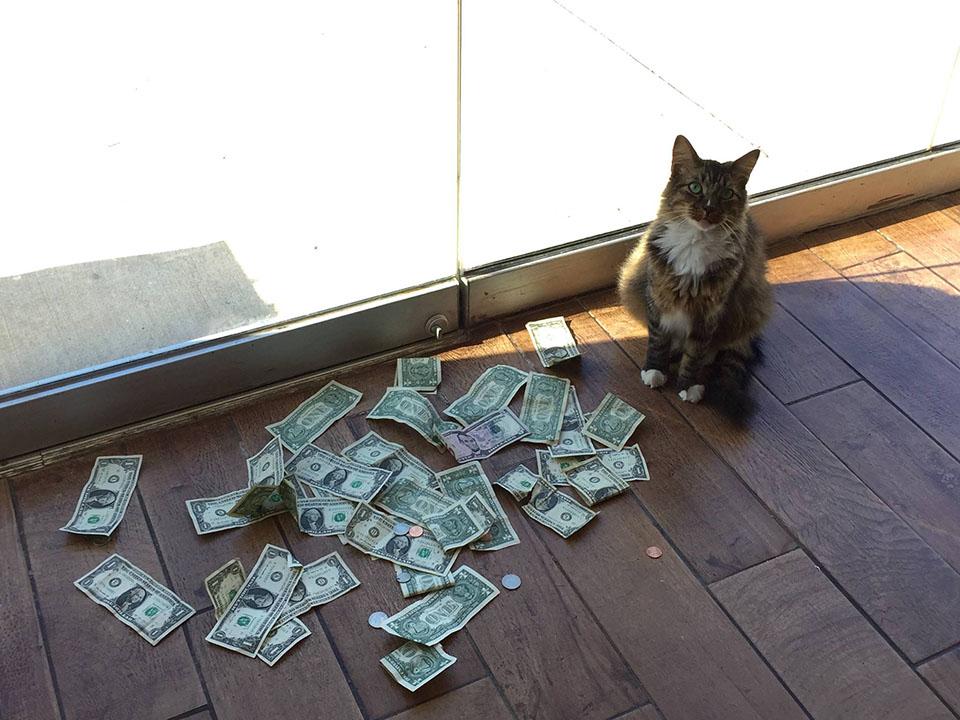 Gato toma el dinero de los transeúntes