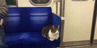 Gato toma el metro de Tokio por si mismo