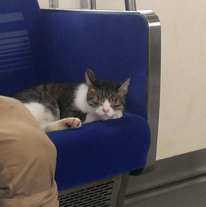 Gato toma el metro