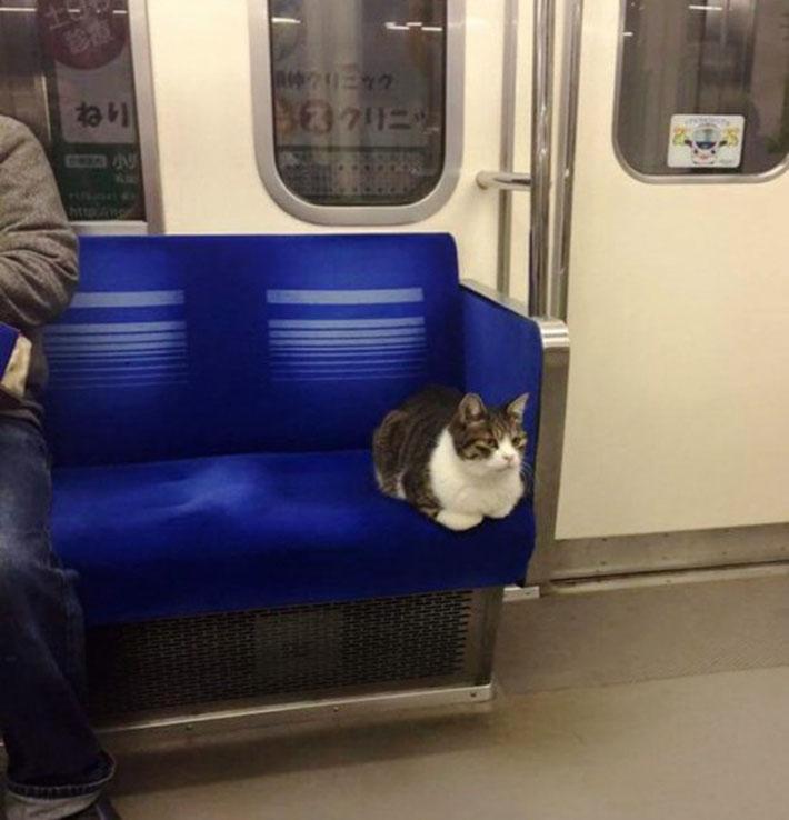 Gato viaja en metro en Tokio desde 2013