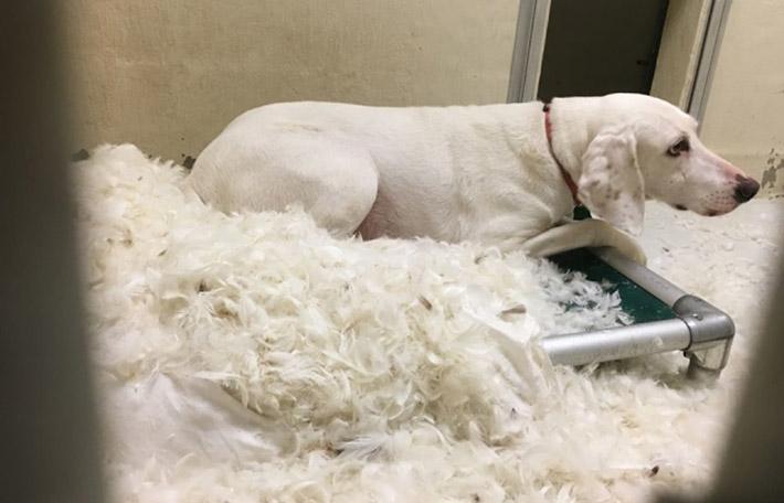 Gumby destroza una cama