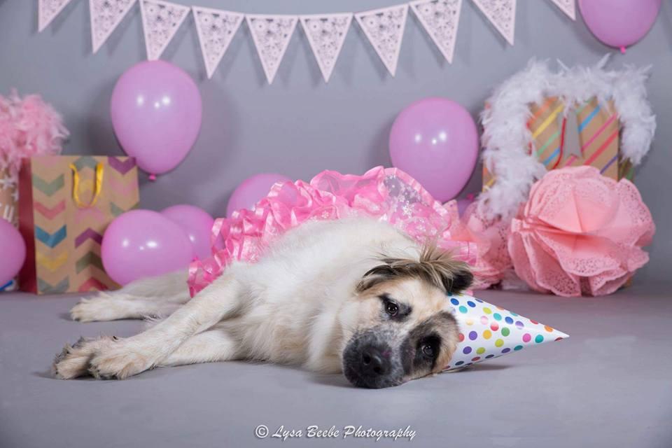 Holliday cumpleaños