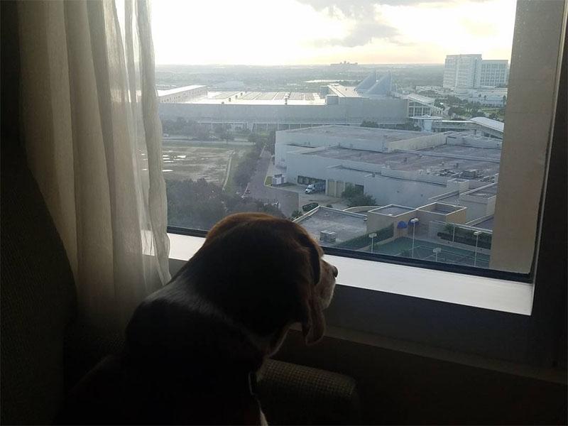 Hotel permite perros durante huracán