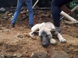 Jacinto aún espera a su padre humano fallecido en el terremoto