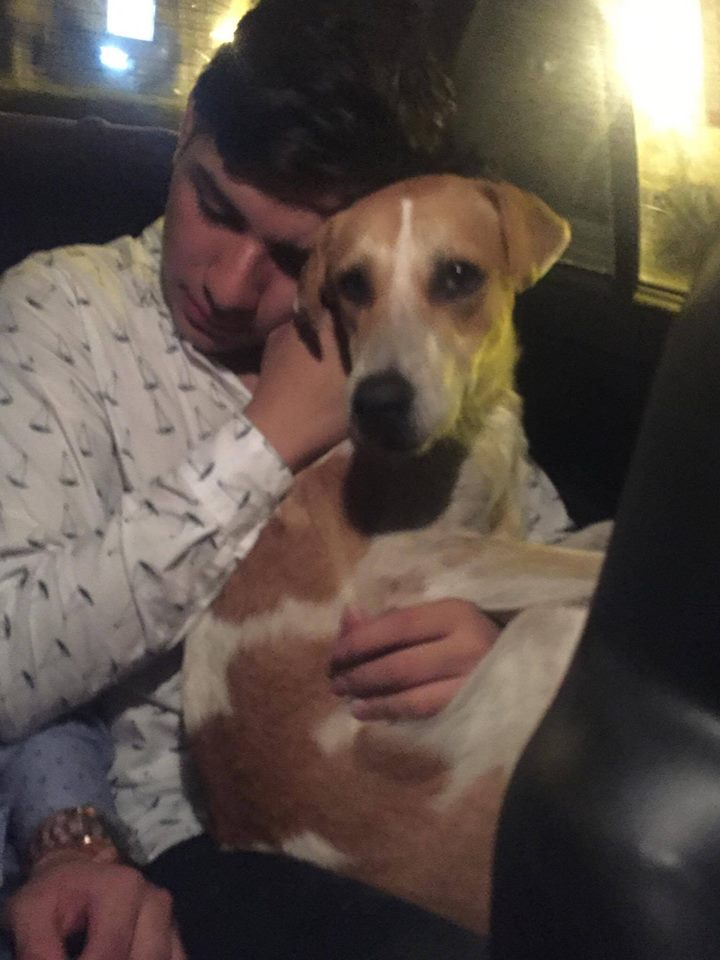 Joven adopta perro al salir de discoteca