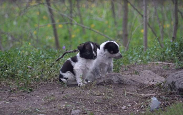 Los perros de Chernóbil buscan afecto humano