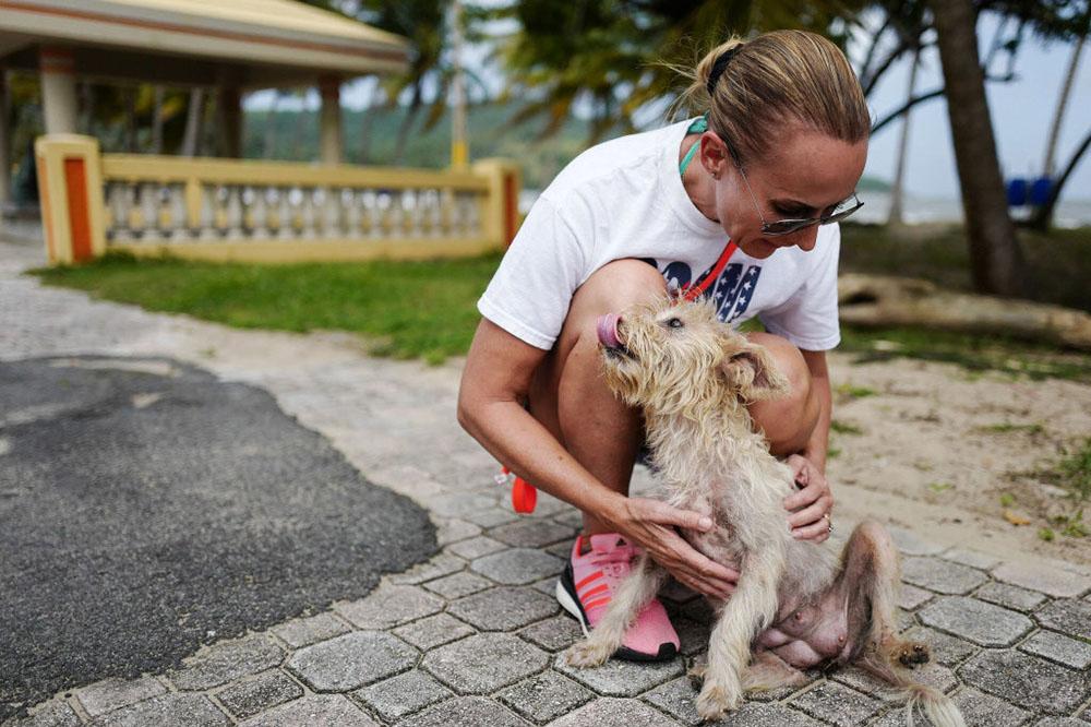 Manada de perros abandonados en Puerto Rico muere por el huracán María