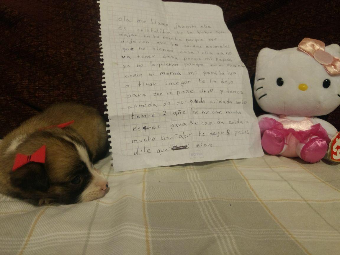 Niña abandona perrita junto a una carta