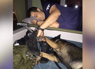 Oficial y su K-9 tomados de la mano durante el huracán Irma